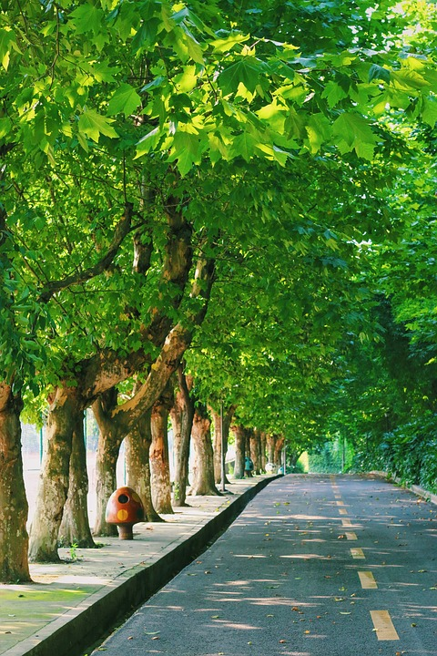 Campus, Green, Leaf, Road, Tree, Alley, Summer