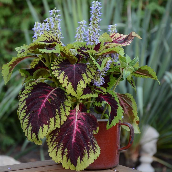 Nettle, Flower, Plant, Green, Garden, Sheet, Summer