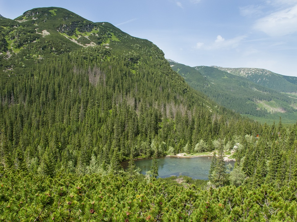 Roháče, Country, Pleso, Trees, Summer, Green, The Sky