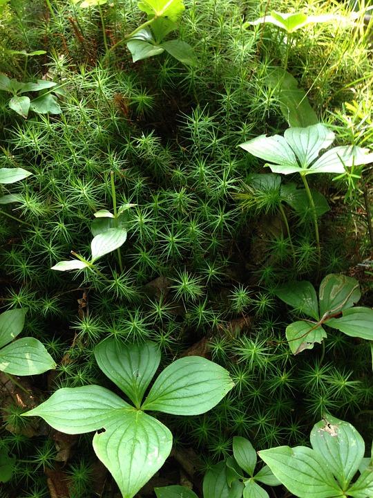 Nature, Green, Greenery, Environment, Natural, Summer