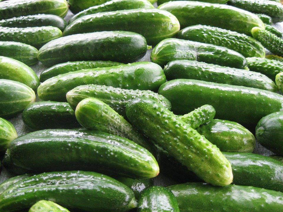Cucumbers, Summer, Why, Harvest