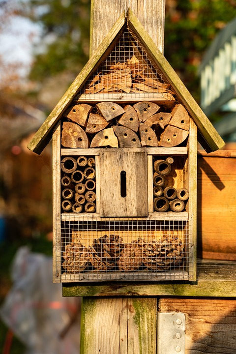 Insect Hotel, Insect, Summer, Insect House, Insect Box