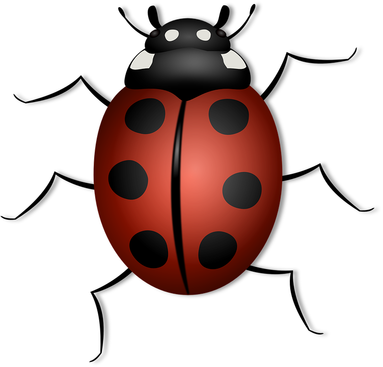 Ladybug, Animal, Beetle, Bug, Insect, Luck, Summer, Red