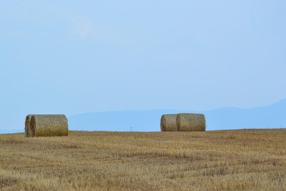 Field, Landscape, Nature, Summer, Countryside