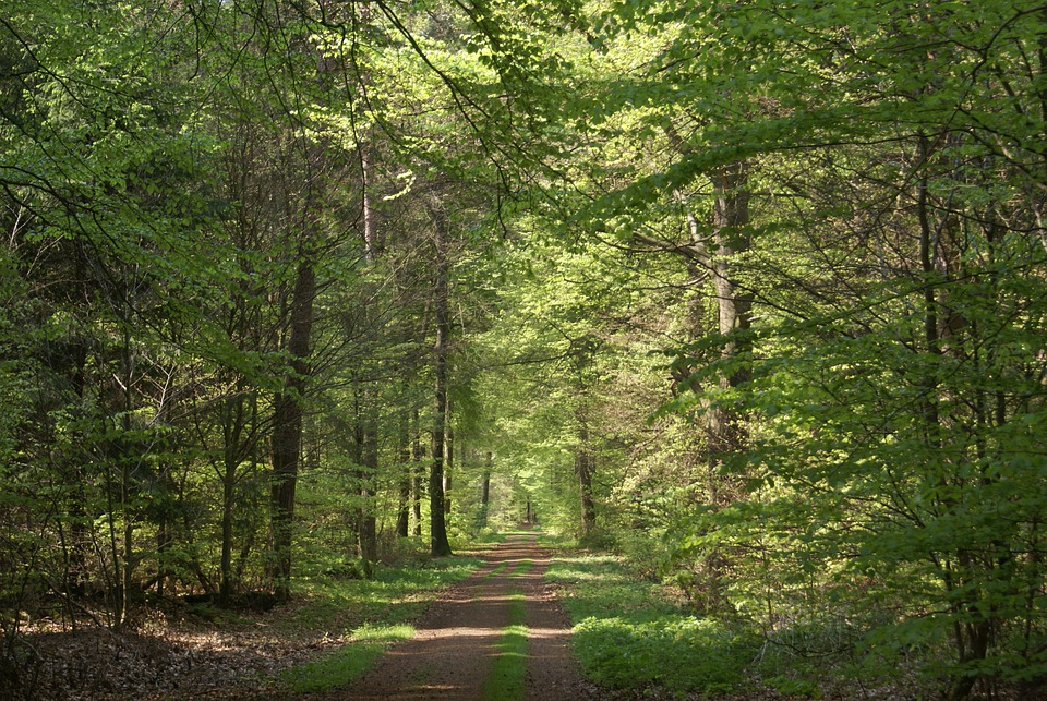 Forest Path, Summer, Forest, Lane