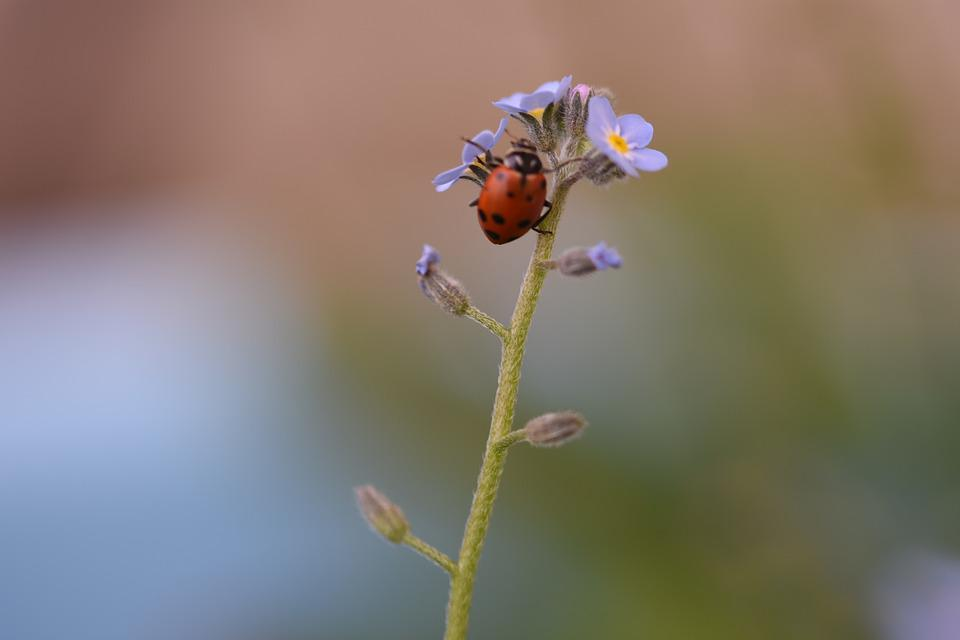 Nature, Insect, Outdoors, Summer, Bee, Leaf, Flower