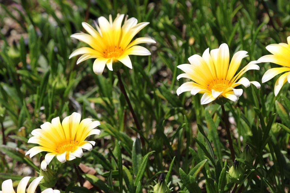 Nature, Summer, Flora, Garden, Sun, Flower, Petal, Leaf