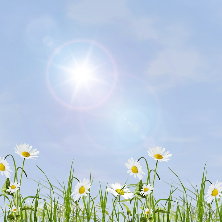 Field, Summer, Lawn, Nature, Lights, Sky, Daisy