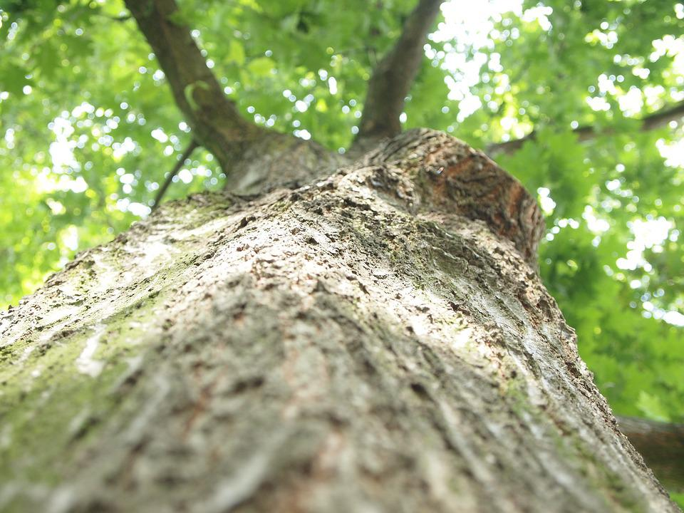 Tree, Log, Summer
