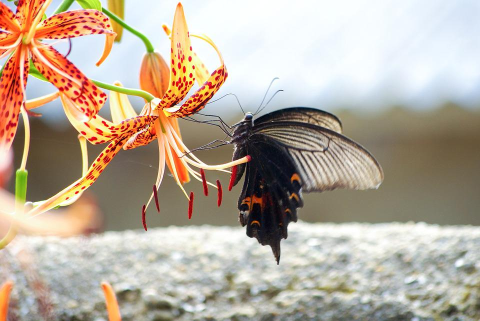 Nature, Insects, Long Tail Now Or, Butterfly, Summer