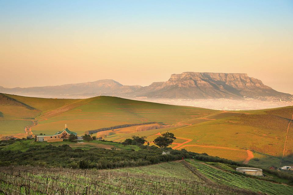 Table Mountain, Landscape, Morning, Flowers, Summer