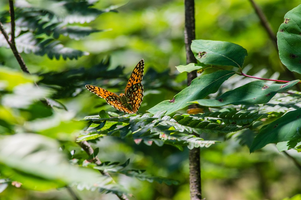 Butterfly, Orange, Wings, Nature, Summer, Natural