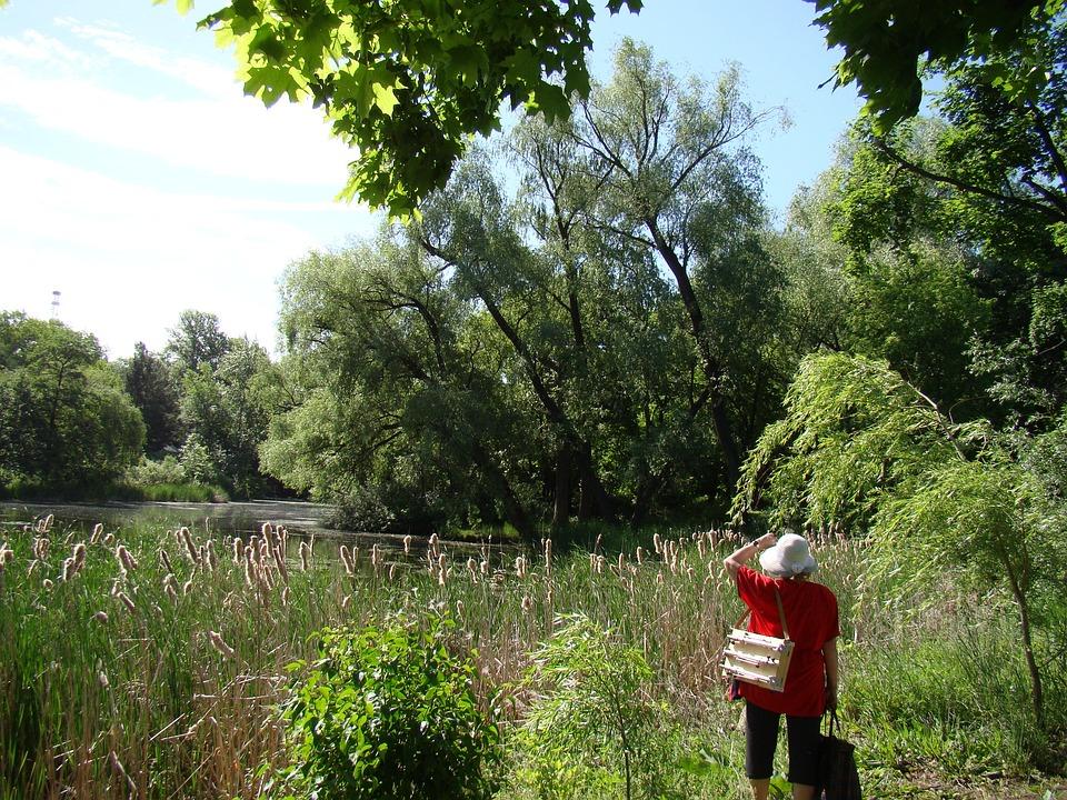 Nature, Trees, Artist, Summer, Sun, Reeds, River