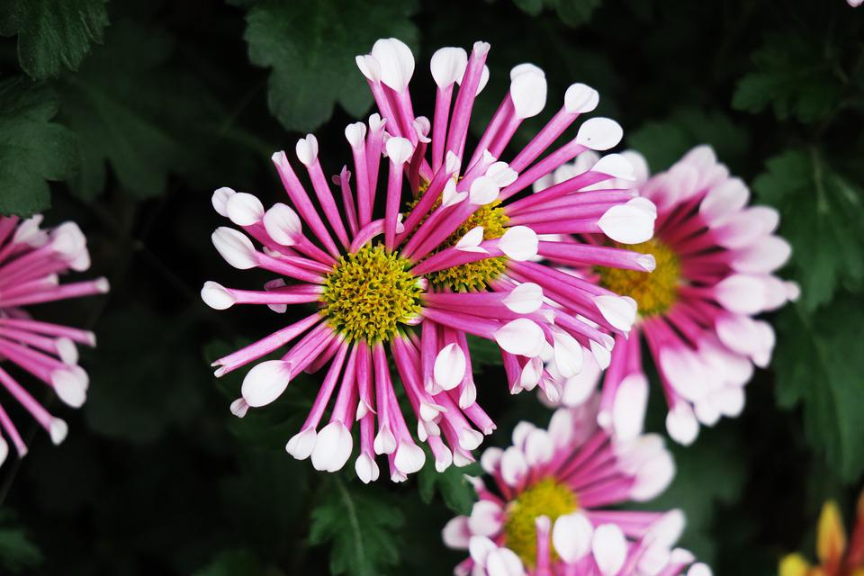 Nature, Flower, Plant, Summer, Garden, Beautiful, Leaf