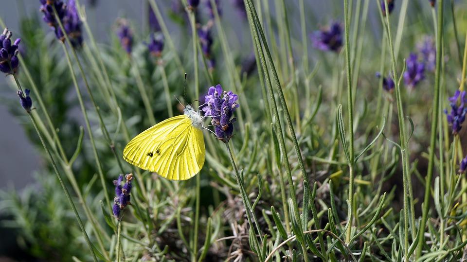 Butterfly, Nature, Blossom, Bloom, Flower, Summer