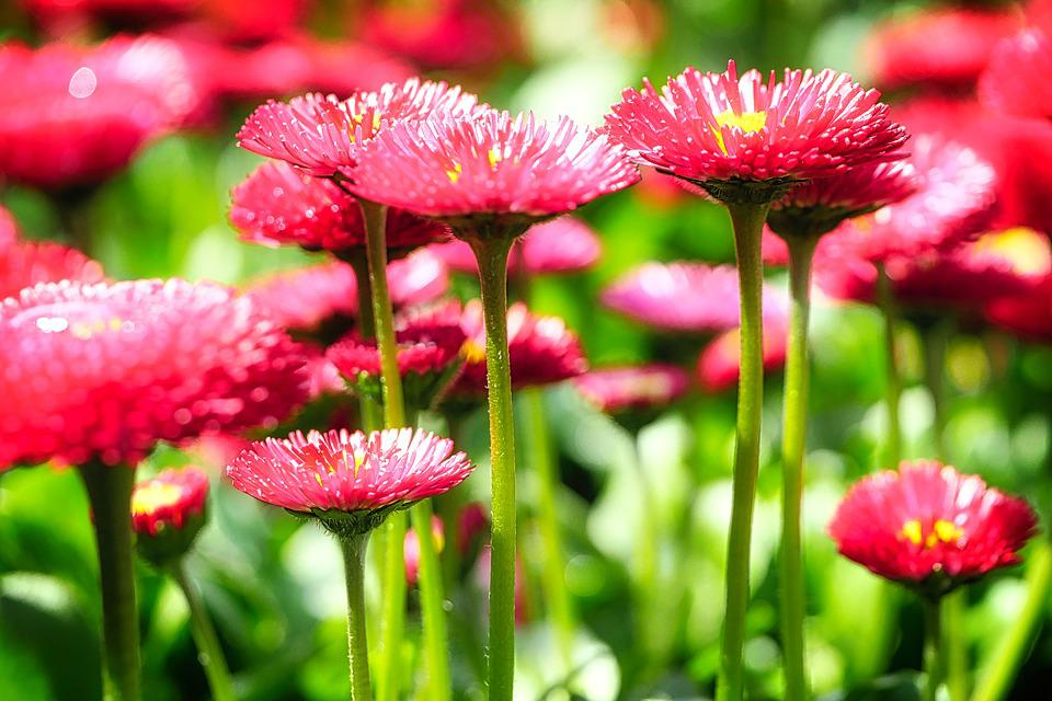 Nature, Plant, Flower, Summer, Garden, Bright, Petal