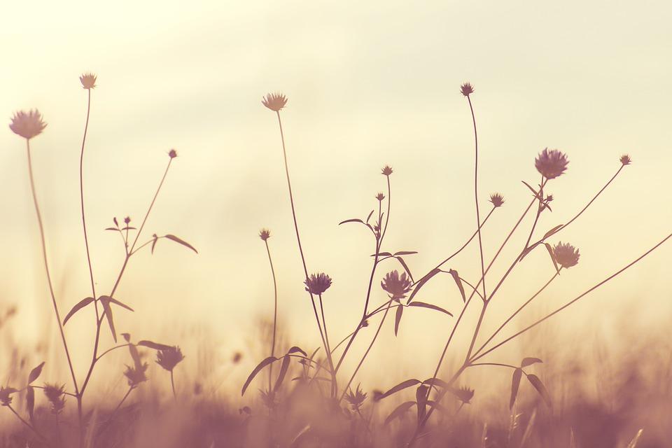 Bloom, Blossom, Flora, Flowers, Nature, Plants, Summer