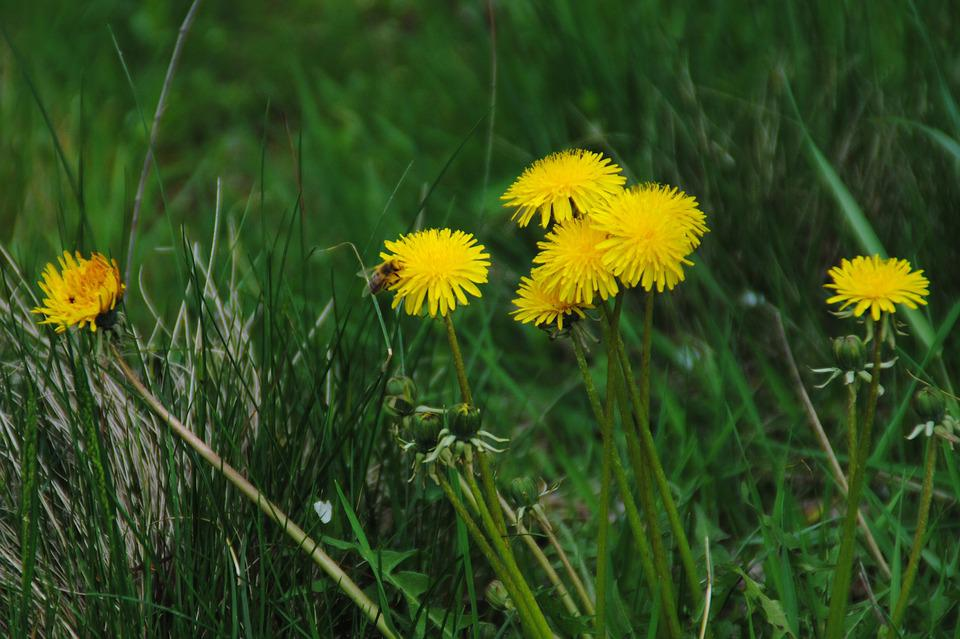 Flowers, Grass, Summer, Nature, Yellow Flowers