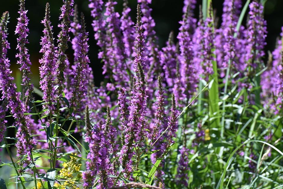 Flowers, Summer, Plant, Bright, Summer Flower, Nature