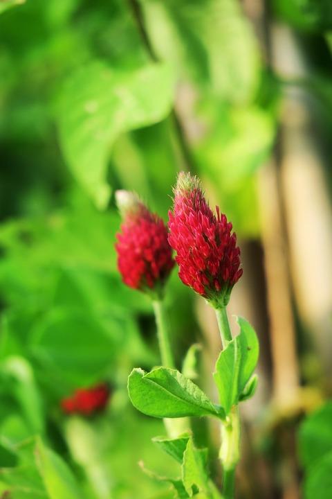 Leaf, Nature, Plant, Garden, Summer, Close-up, Flower