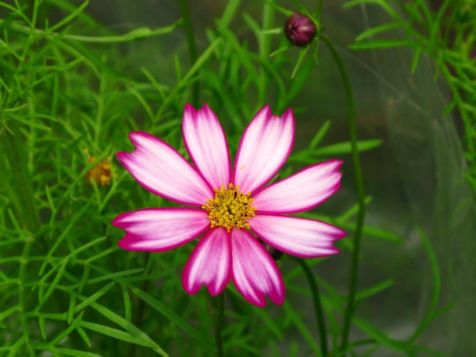 Nature, Summer, Flower, Plant, Leaf, Garden, Light