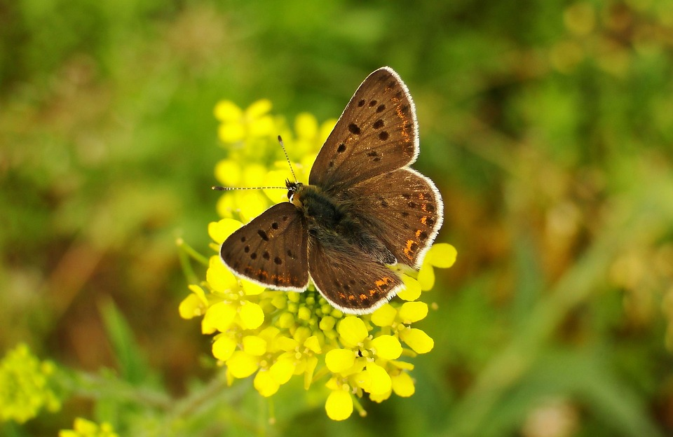 Nature, Butterfly Day, Insect, Summer, At The Court Of