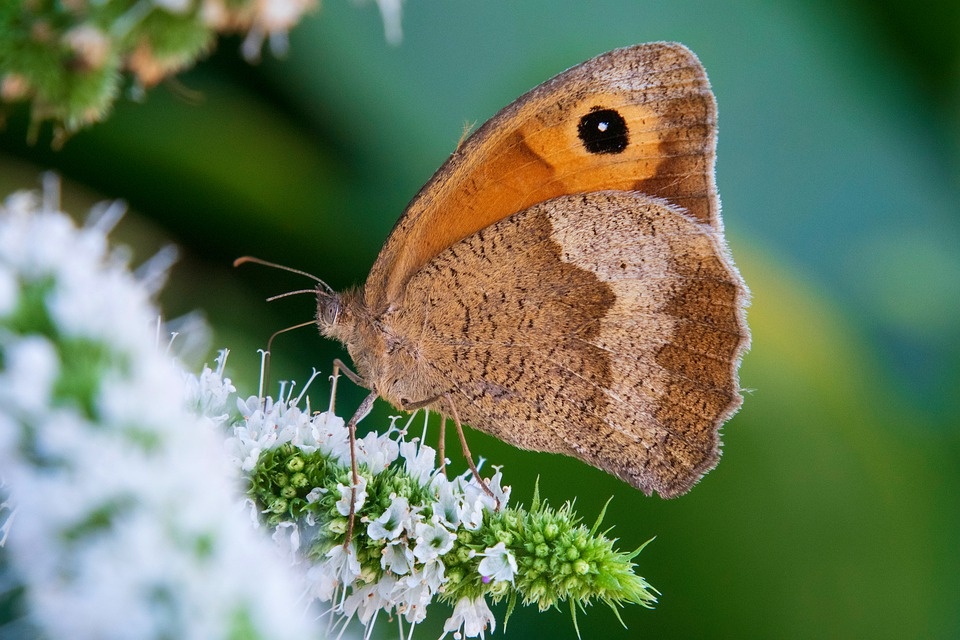 Butterfly, Insects, Nature, Macro, Wing, Wings, Summer