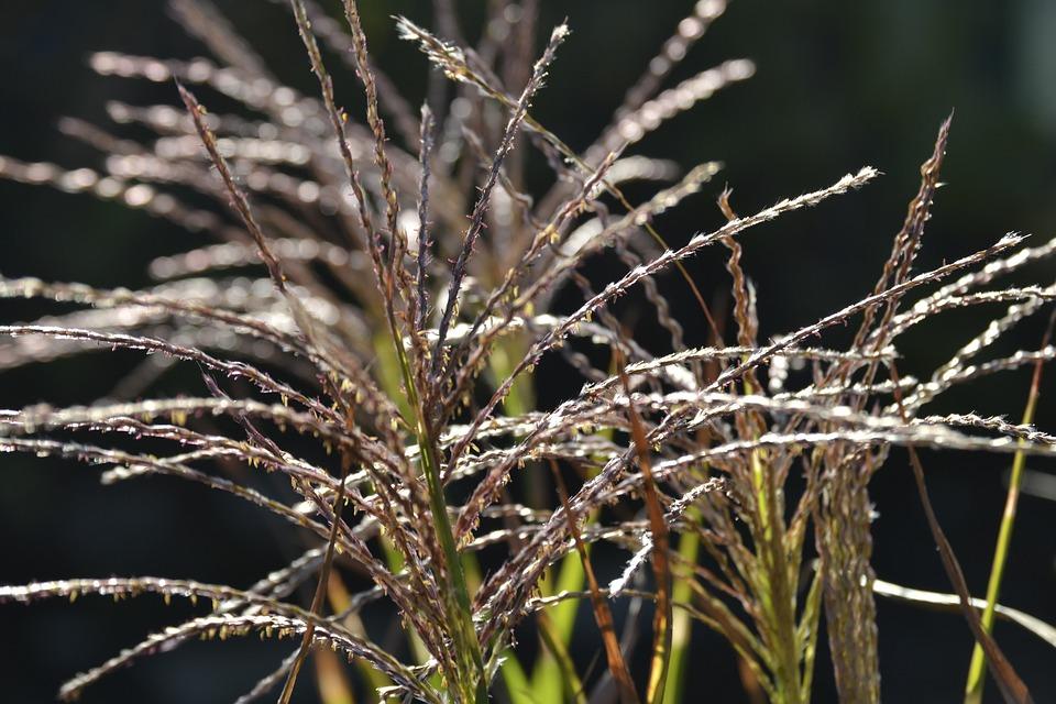 Nature, Plant, Grass, Summer