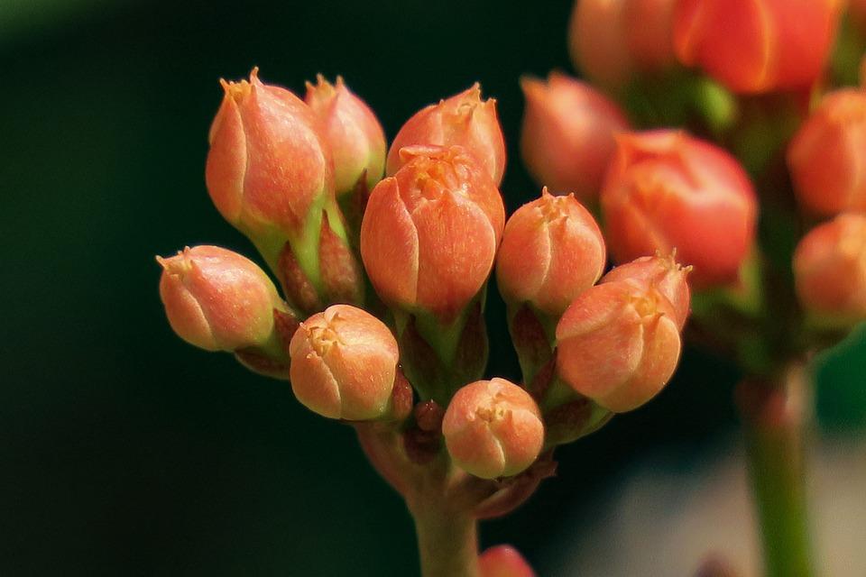 Spend Long Jeon, Nature, Plant, Flower, Leaf, Summer