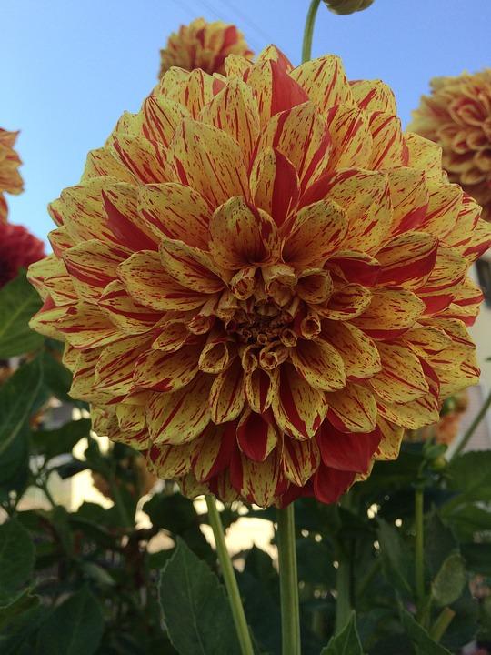 Flower, Summer, Sun, Nature, Blossom, Bloom, Yellow