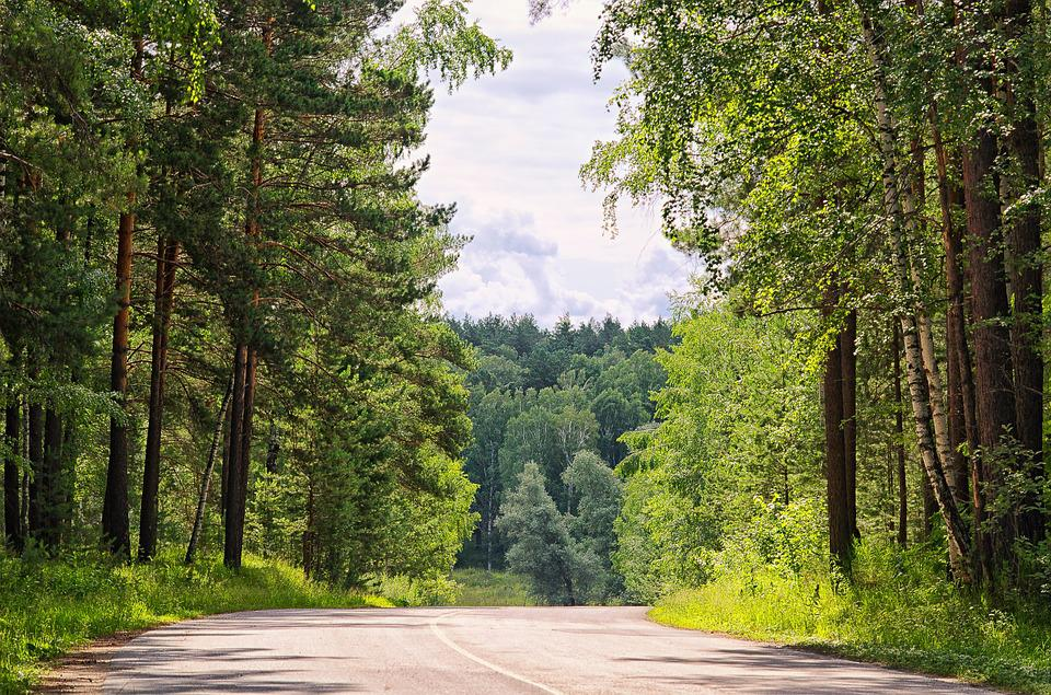 Summer, Forest, Road, Nature, Tree, Sky, Wild Wood