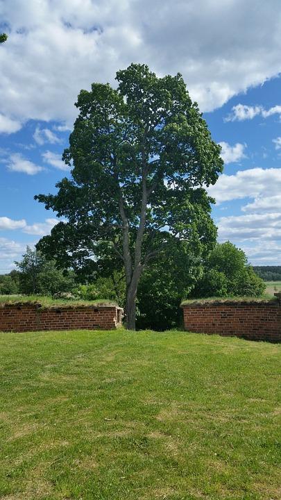 Oak, Castle, Ruins, Outdoor, Clouds, Summer, Grass