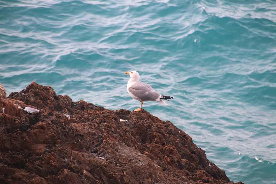 Beach, Sea, Bird, Dove, Morocco, Ocean, Summer, Water