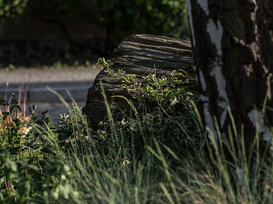 Nature, Wood, Tree, Green, Scenic, Old, Log, Summer