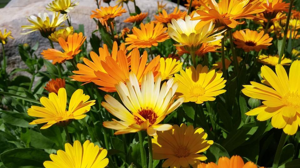 Summer, Flowers, Orange, Nature, Summer Flowers, Garden