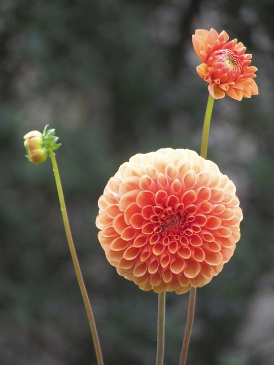 Nature, Flower, Plant, Summer, Outdoor, Fulfillment