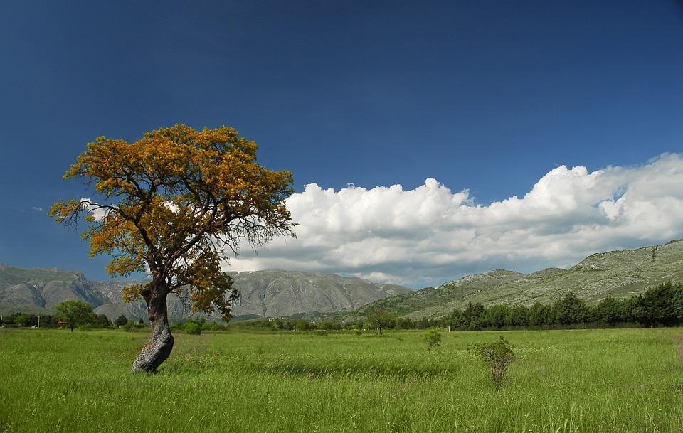 Tree, Nature, Landscape, Panoramic, Grass, Summer