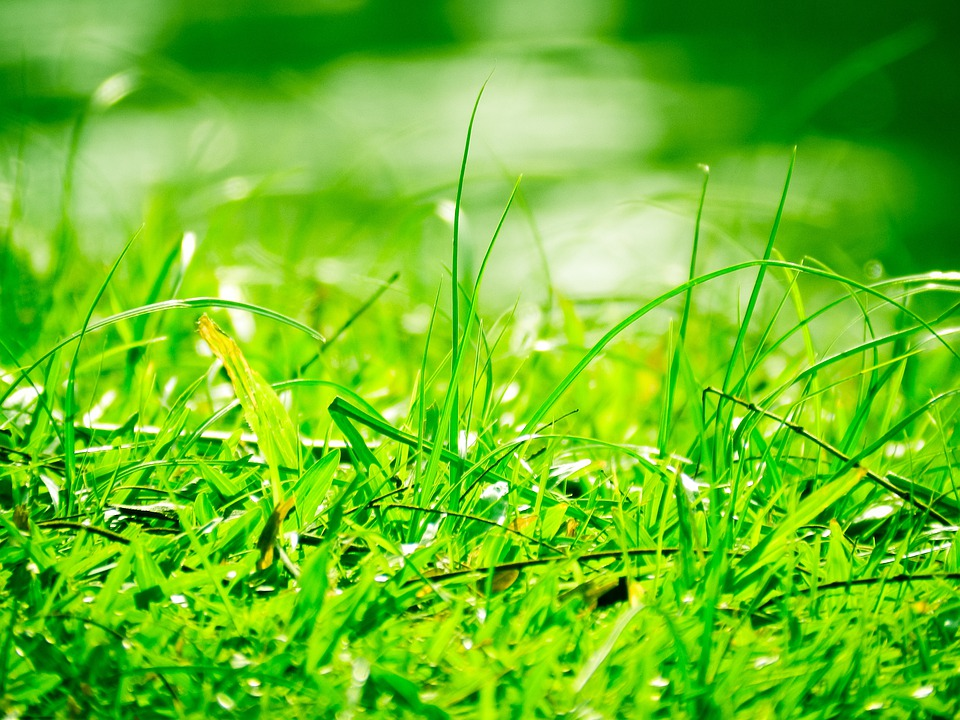 Green, Garden, Park, River, Holiday, Summer, Macro