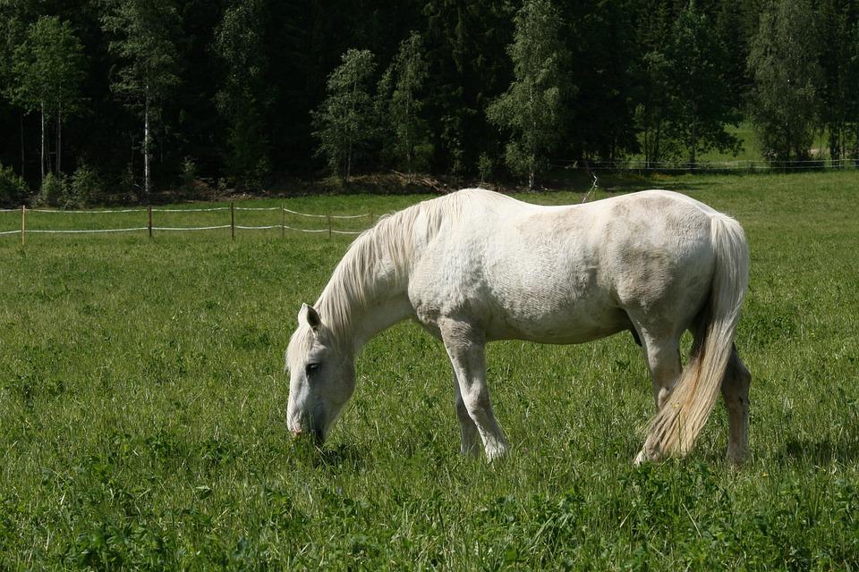 White Horse, Summer Pasture, Whitehorse