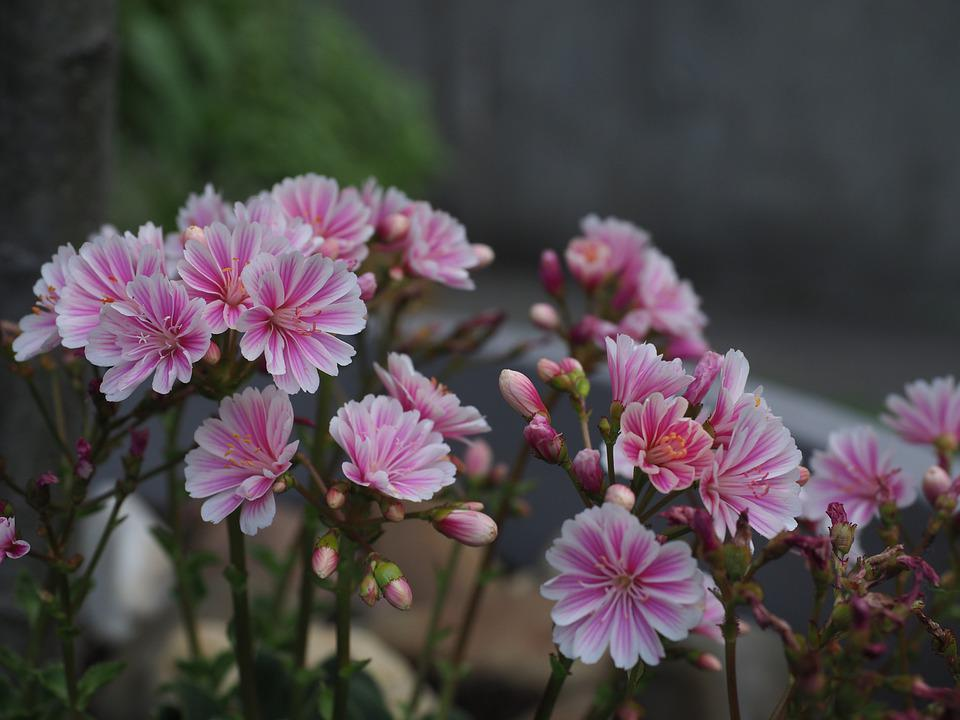 Flowers, Plant, Spring, Summer, Bloom, Garden, Botany