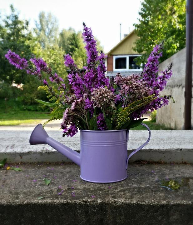 Summer, Flowers, Nature, Plant, Garden, Green, Design