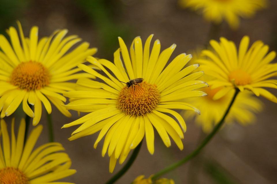 Nature, Flower, Plant, Summer, Petal, Blooming, Garden