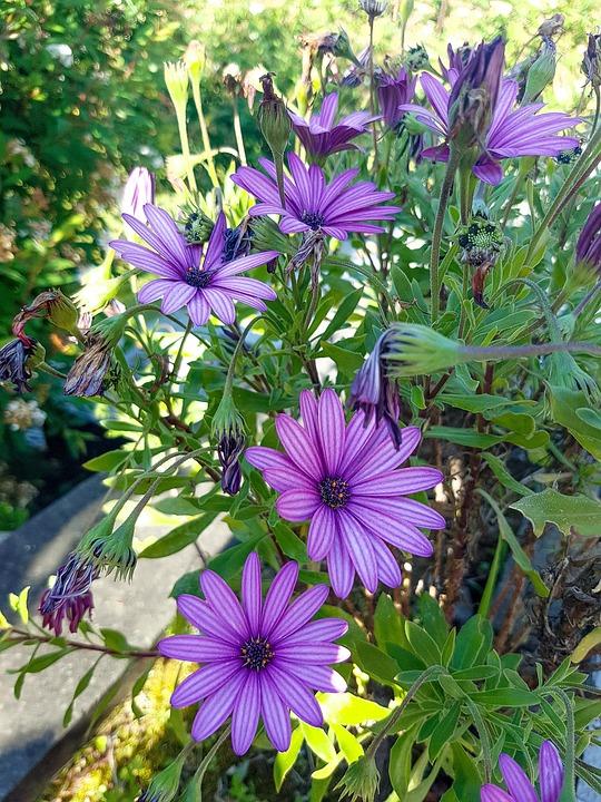 Flower, Plant, Nature, Summer