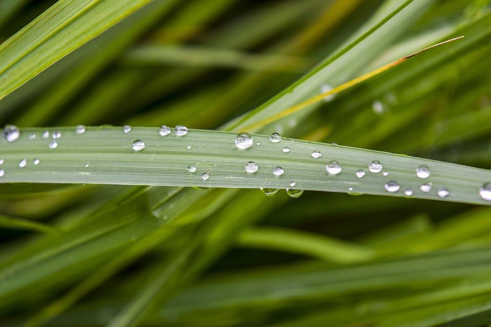 Nature, Plant, Summer, Green, Grass, Drop Of Water