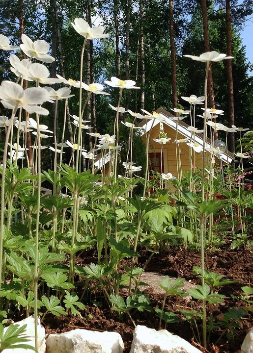 Flower Forest, Flower, Flowers, Summer, Garde, Plants