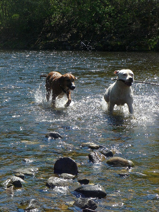 Summer, Sun, Water, Dogs, Pleasure