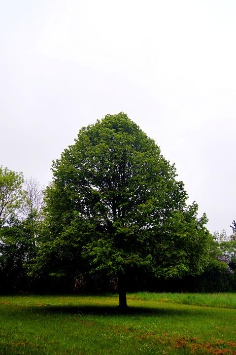 Tree, Prairie, Landscape, Nature, Field, Summer, Green