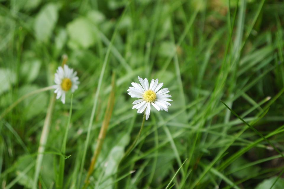 Nature, Lawn, Plant, Summer, Prairie, Flower, Garden