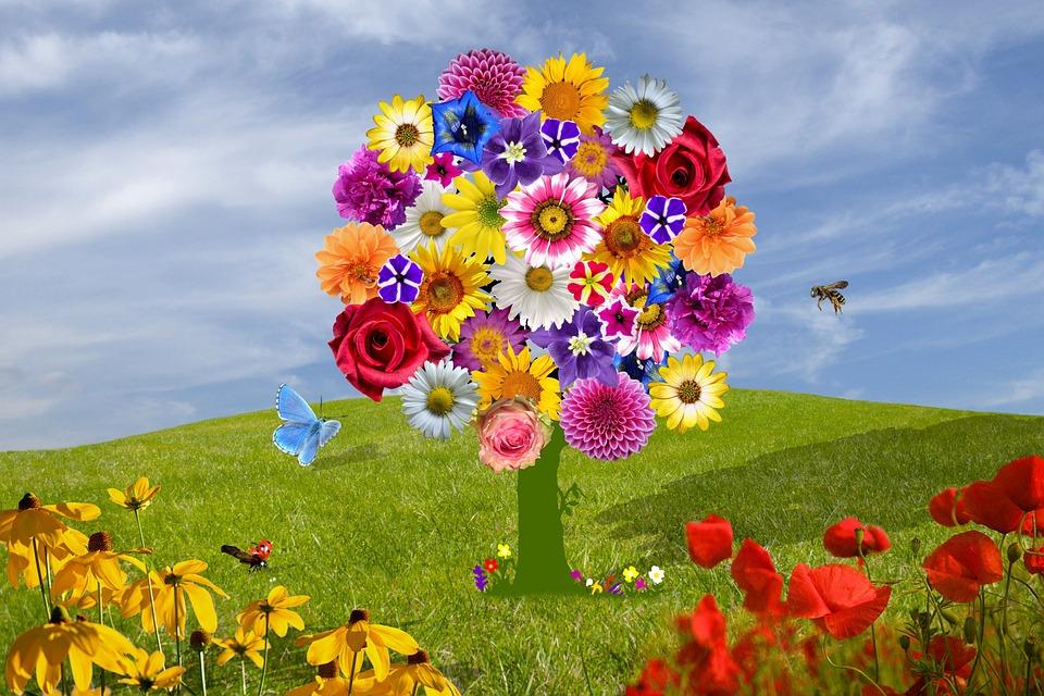 Flowers, Purple Flower, Summer, Spring, Summer Flower