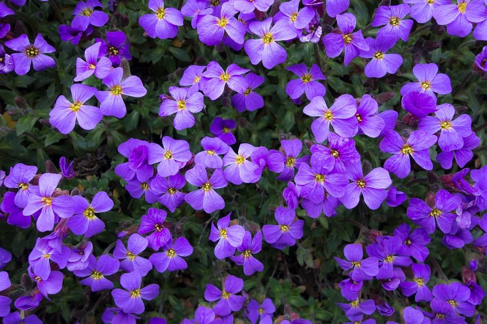 Free photo summer purple plant flowers background spring max pixel flowers purple summer spring background plant mightylinksfo